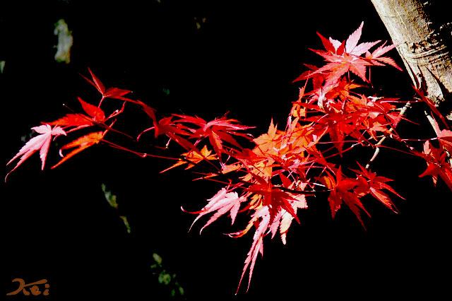 桜山公園06