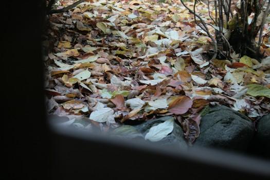 こんな秋の終わりも見っけた・・・永平寺にて第二弾