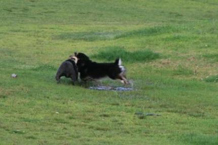 泥の跳ね具合が素敵です。