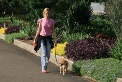 可憐な女性と柴犬。絵になります。