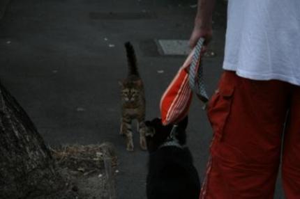 猫に遭遇。