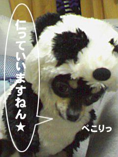 photo_20071118021110.jpg