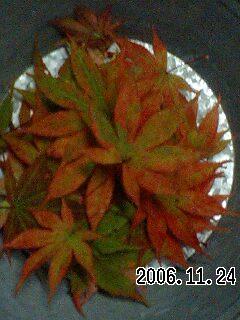 20061124195938.jpg