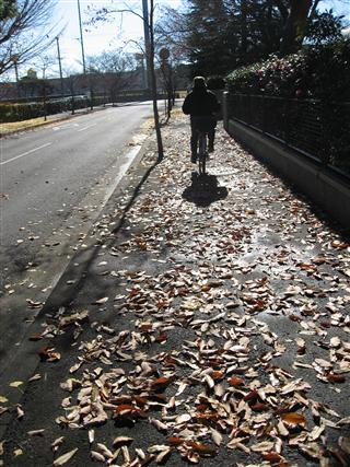 歩道・落ち葉