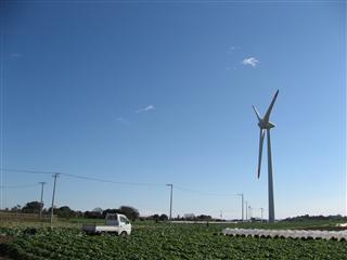 キャベツ畑に立つ風車
