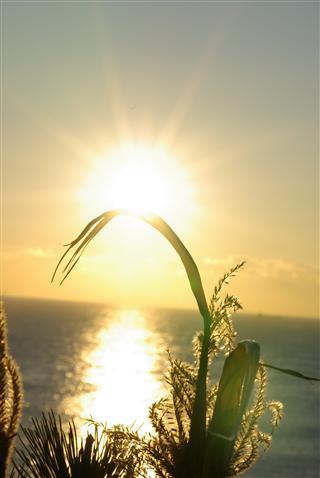 日輪の輝き