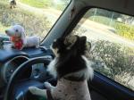 運転だよっ