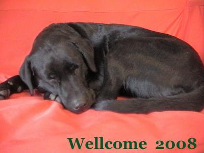 wellcome 2008 001