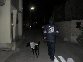 こんな夜中にお散歩行くの?