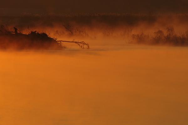 朝霧の河畔1
