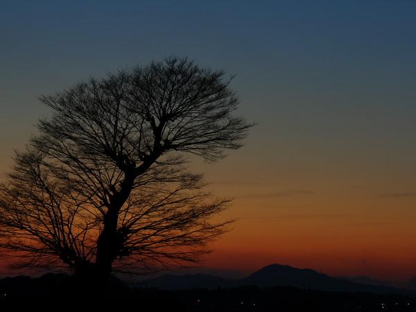 太平山夕景