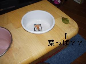 画像 001-2