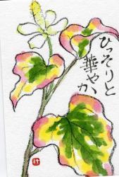dokudami_fuiri.jpg