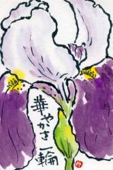 hana-syoubu-1.jpg