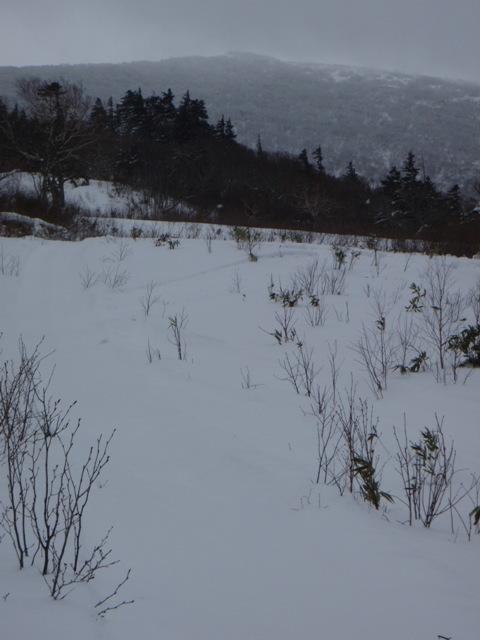 遠くに見える岩内岳とブッシュ