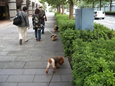 みんなでお散歩~っ