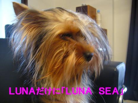 LUNA SEA!?