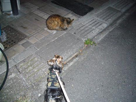 LUNA&ネコ