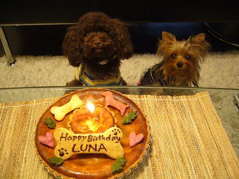 LIZ&LUNA&CAKE