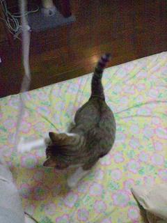 ヒモ遊び3