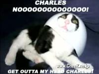 猫の笑える画像の詰め合わせ