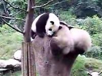 いじわるパンダ