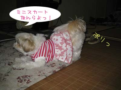 IMG_0712・ミニ