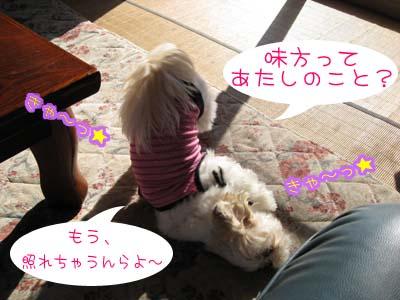 IMG_0857・きゃ