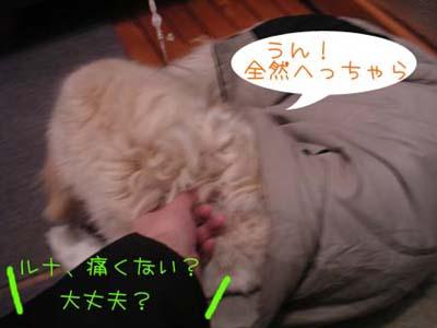 PICT0160_20071214223134.jpg