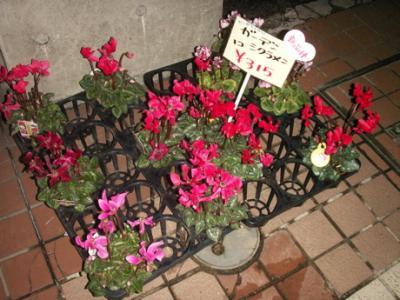 冬の花08
