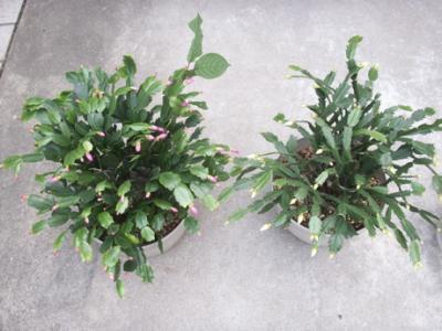冬の花たち04