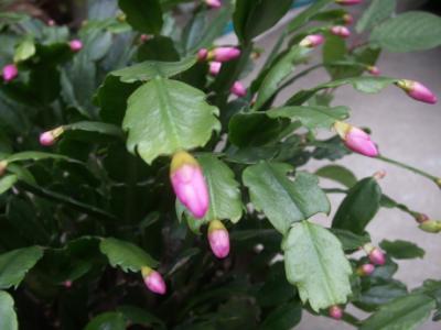 冬の花たち05