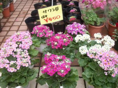 冬の花たち09