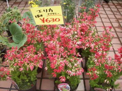 冬の花たち10