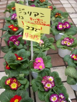 冬の花たち16