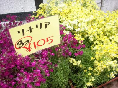 冬の花たち17