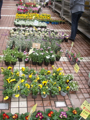 冬の花たち18