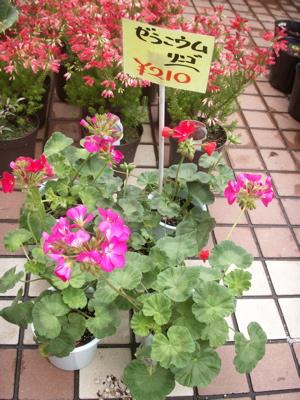 冬の花たち19