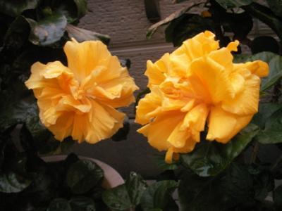 朝の花02