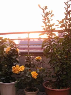 朝の花03