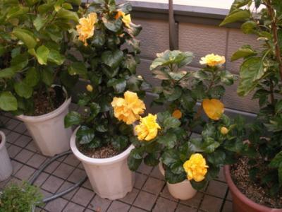 朝の花04
