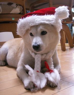 マッククリスマス001
