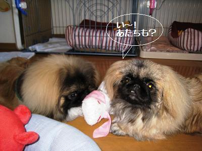 2008-1-4-kai-nene-2.jpg