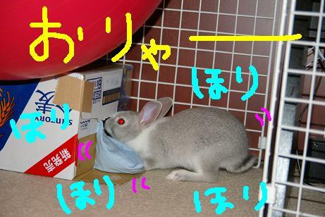 11_20071202075948.jpg