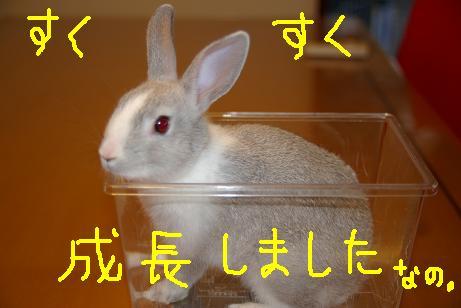 11_20071204100815.jpg