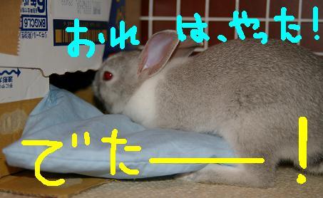 13_20071202080008.jpg