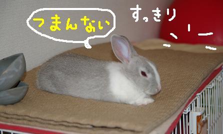 14_20071211111903.jpg