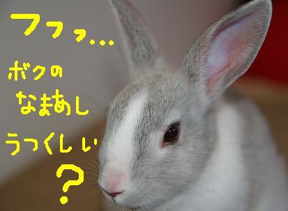 14_20071214091433.jpg