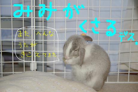 2_20071126093703.jpg