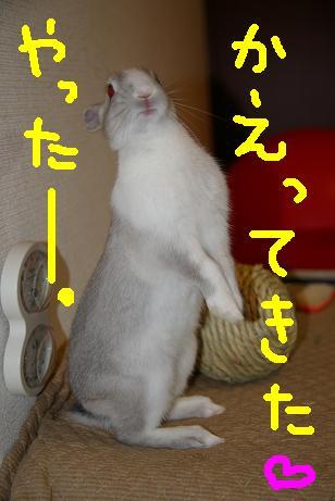 2_20071216083212.jpg